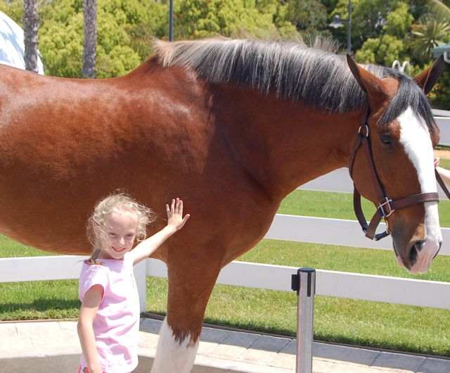 Josie with a clydesdale at seaworld